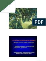 02 Celulas Del SN - Aspectos Funcionales y Bioquimicos