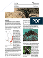 Fact Sheet Funnel Web Spiders