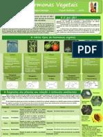 Poster de Biologia - Hormonas Vegetais