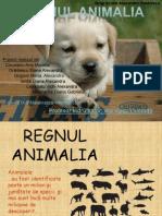 Regnul Animalia