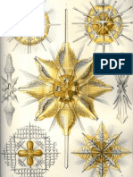 Ernst Haeckel - Artforms of Nature