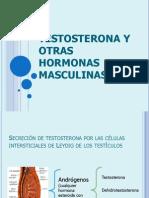 reproductor masculino