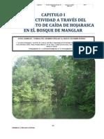 Productividad del Bosque de Manglar del Sector Occidental de la Bahía de Jiquilisco