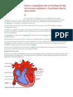 Clei 3 Trabajo Sistema Cardiovascular