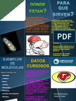 Folleto Miramar Proteina