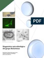 Seminario Diagnostico Microbiologico de Rickettsias