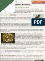 Ganoderma Theraputic Mushrooms