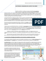 Bacterias quimiolitótrofas del hierro y azufre (txt)