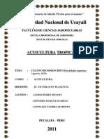 Cultivo de Boquichico Acuicultura