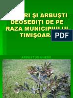 Arbori Si Arbusti Deosebiti Final