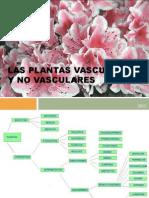 Las Plantas Vasculares y No Vasculares