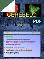 2011-Cerebelo