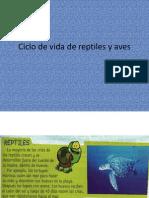 Ciclo de Vida de Reptiles y Aves CLASE 5