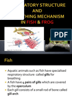 respiration in fish n frog