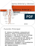 Sistema Arterial y Venoso Importante