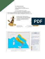 A formação Histórica da Lingua Portuguesa