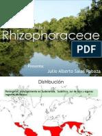 Familia Rhizophoraceae