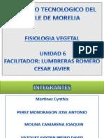 fisiologia vegetal ITVM