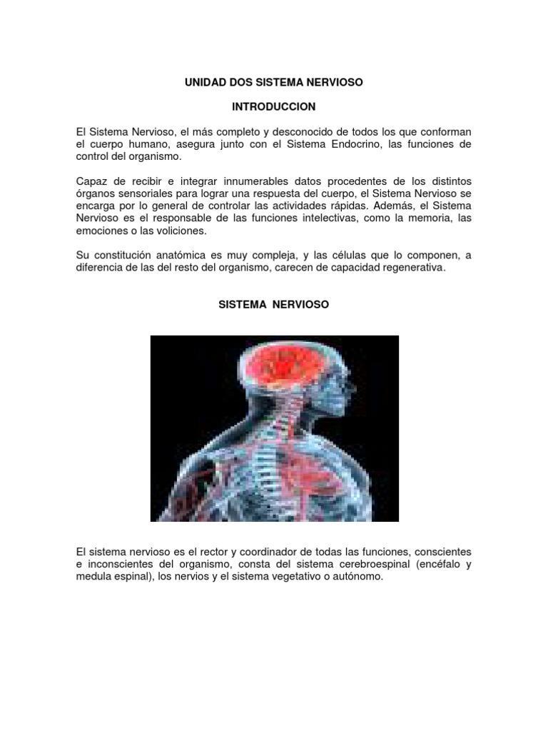 Increíble Capítulo 2 Anatomía Y La Fisiología De Libro Para Colorear ...