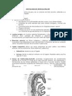 Histologia de La Vesicula