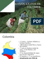 CULVIVOS ILÍCITOS EN COLOMBIA