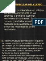 Sistema Muscular Del Cuerpo