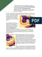 Dopamina Si Parkinson