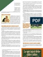 Dog Bite Brochure Spanish