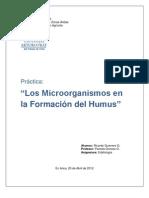 Los Microorganismos en la formación del Humus