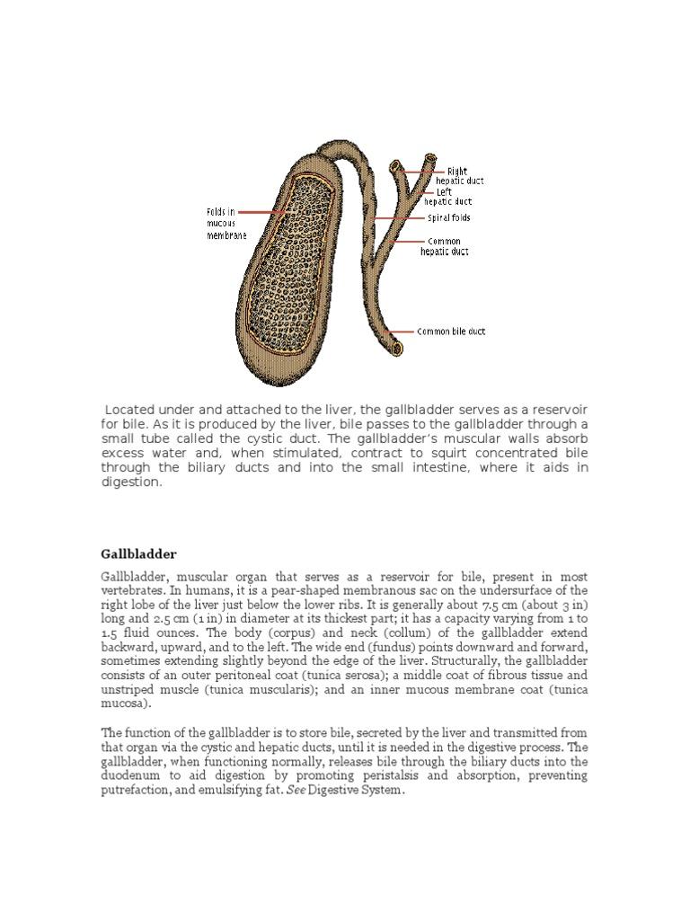 Gallbladder Gallbladder Bile