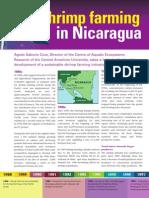 Shrimp farming in Nicaragua, winter 2007-08