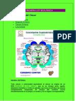Entendiendo El Cancer Por El Dr.hamer. y Las 5 Leyes Biologicas.