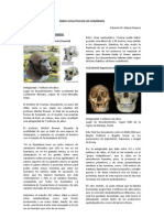 2_ÁRBOL EVOLUTIVO DE LOS HOMÍNIDOS