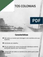 Insetos_Coloniais