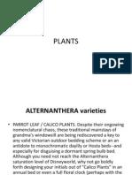ALTERNANTHERA varieties