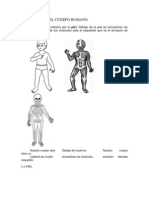 Estructura Del Cuerpo Humano