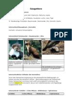 Säugetiere - Tierbestimmung