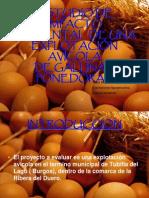Impacto ambiental de una explotación avícola de pollos