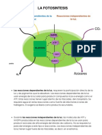 Actividad 3.- Diagrama de Flujo de La Fotosintesis