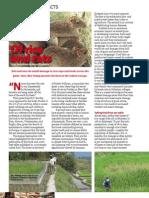 RT Vol. 6, No. 3 Rice facts
