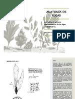 Anatomia de Algas