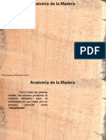 anatomadelamadera-090703101359-phpapp02