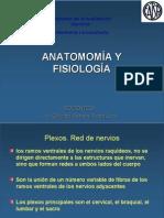 Anatomia Topografica y Cabeza