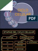 Adn y Ciclo Celular