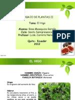 Presentacion Power Point de Trabajo Plantas II Rosa Masaquiza