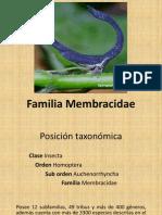 Familia Membracidae