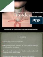 Clase de Tiroides