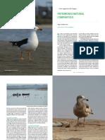 Aves Migratorias Del Uruguay