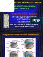 Intestino Post Cav y Membranas