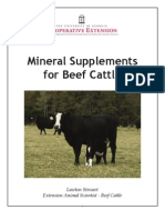 Mineral Supplements for Beef Cattle